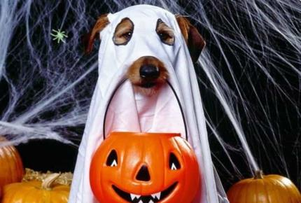 10 ideas de disfraces para perros en Halloween (FOTOS)